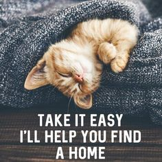 Check out our private Real Estate Mastermind for top realtors. Join of your RE friends. PS its free :) Let's home shop!🏘😸 Rates are down right now📉, which means lower mortgage payments! Real Estate Career, Real Estate Business, Real Estate Marketing, Business Money, Real Estate Quotes, Real Estate Humor, Funny Weekend Quotes, Funny Friday, Friday Memes