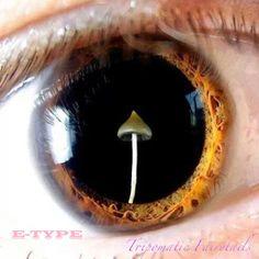 tripomatic fairytail E-TYPE Neuster Mix von E-TYPE: Tripomatic Fairytails - Tech-House & Techno
