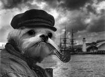 Top 10 Photos of the Week Grey Beards, Sea Captain, Float Your Boat, Cartoon Dog, Tall Ships, Photos Of The Week, Cute Photos, My Images, Friends