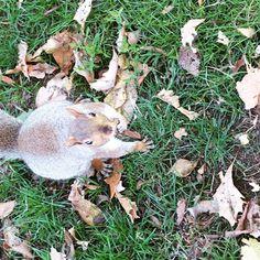Sassy #squirrel #boston #wildlife
