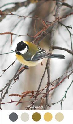 KOOLMEESJE - Vogel op tak in de tuin. Kleurenpalet geel / groen en grijs.