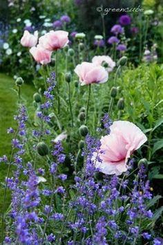 greencube garden and landscape design, UK gorgeous gardens Beautiful Gardens, Beautiful Flowers, English Garden Design, Cottage Garden Plants, Garden Grass, Big Garden, Garden Path, Home And Garden Store, Pot Jardin