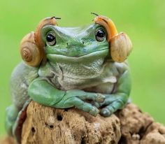 T'écoutes quoi ? --get the feeling he's been there a while with the snail ear buds