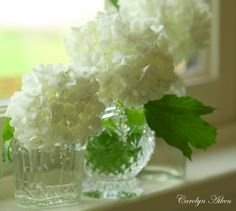 I simply MUST add some lovely white's to my hydrangea gardens