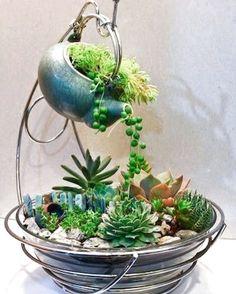 Magical DIY Succulent Fairy Garden Ideas DIY Garden Yard Art When growing your own lawn yard ar Succulent Gardening, Garden Terrarium, Cacti And Succulents, Planting Succulents, Container Gardening, Planting Flowers, Terrariums, Succulent Seeds, Cactus Seeds