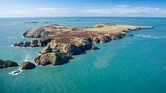 Ramsey Island RSPB reserve.