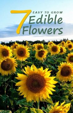 Explore the ancient art of adding flowers as flavor and garnish to foods. Here are 7 easy to grow edible flowers to start from seed and plant in containers. Visit The Grocery Garden at http://thegrocerygarden.blogspot.com/2014/12/easy-to-grow-edible-flowers.html