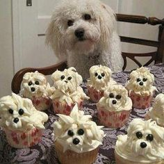 How cute is this??? The adorable cupcakes look like pups of the adorable doggie!