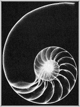 fibonacci art - Google Search