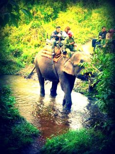 Chitwan National Park, Nepal | What an experience!