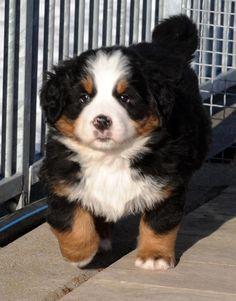 Little dog :) He's same like my dog ;)