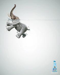 Lenor fabric softener: Elephant