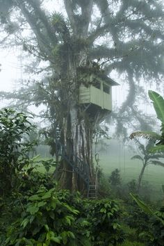 tree house safe steps