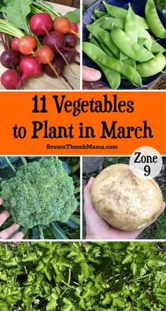 It's not too cold to garden! This planting guide for Zone 9 gives you 11 vegetables you can plant in March for a big harvest this summer. Includes recommended varieties and planting tips. #garden #vegetables #planting