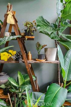 Beautiful DIY Plant Room Ideas for Your Home! Farmhouse Side Table, Farmhouse Kitchen Decor, Dubai Miracle Garden, Olive Garden, Room With Plants, Buying A New Home, Dining Room Inspiration, Plant Shelves, Home Upgrades