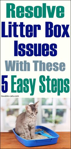 Lovable Cats Resolve Litter Box Issues With These 5 Easy Steps - Lovable Cats Funny Dogs, Funny Animals, Cute Animals, Cat Toilet Training, People Dont Understand, Litter Box, Pet Care, Cat Lovers, Kitten