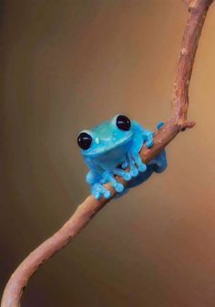 It's customary to post cute fluffy animals, but this frog is adorable! He reminds me of a frog from a book I read. Cute Baby Animals, Animals And Pets, Funny Animals, Animal Memes, Wild Animals, Smiling Animals, Animal Captions, Animal Funnies, Small Animals