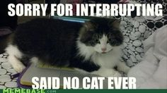 OMG this looks like the cat I had, Emma! She would have done this! Lol