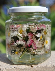 Daisy tincture used as a skin treatment