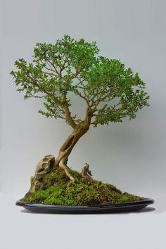 Bonsai by Arthur Korbiel