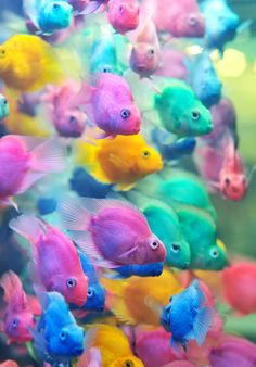 Rainbow color fish under the sea Beautiful Creatures, Animals Beautiful, Cute Animals, Colorful Fish, Tropical Fish, Colorful Animals, Tropical Tattoo, Sweet Animal, Beautiful Fish