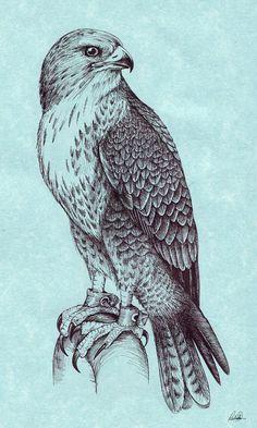 Peregrine Falcon by Grwobert.devianta… on deviantART Peregrine Falcon by Grwobert.devianta… on deviantART Pencil Art Drawings, Bird Drawings, Animal Drawings, Tattoo Drawings, Eagle Tattoos, Feather Tattoos, Animal Sketches, Art Sketches, Falke Tattoo