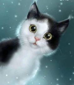 Why Do Cats Suddenly Stare at the Walls, Nothing, or Space I Love Cats, Crazy Cats, Cool Cats, Anime Animals, Cute Animals, Kittens Cutest, Cats And Kittens, Image Chat, Cute Animal Drawings