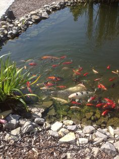 Koi - Teich in BCH Koi, Home And Garden, Interior, House, Water Pond, Indoor, Home, Haus, Interiors