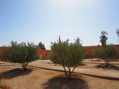 Plantation d'arbres au sein d'une école Association Enfants du désert - Maroc