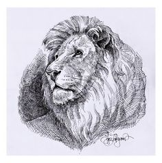 lion drawing, royalty free image