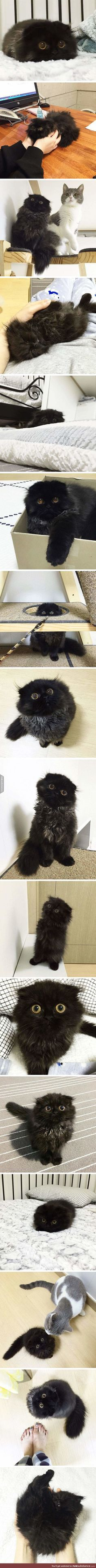 The guy before me saved this to dogs. This is definitely not a dog!! It's a very cute cat