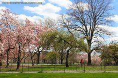 Toukokuun Tyttö - My Villa May: Perjantaikävelyllä Central Parkissa