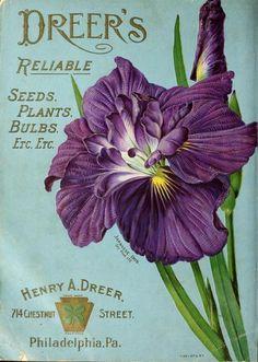 Japanese Iris. Dreer's Reliable Seeds, Plants, Bulbs etc etc. Dreer's Garden Calendar 1903. Henry A. Dreer. 714 Chestnut Street,...