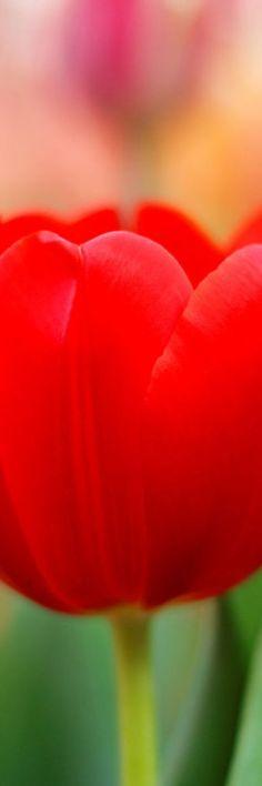 "Seen by KIXX. Gloves ""To protect and Impress"" www.facebook.com KIXXsafety #garden #gloves #tuinhandschoenen"