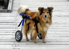 Walkin' Wheels (rear) Dog Wheelchair- featured on Inventor Spot