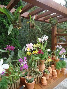 Outstanding balcony garden for dogs exclusive on interioropedia home decor Garden Deco, Love Garden, Balcony Garden, Dream Garden, Outdoor Landscaping, Outdoor Plants, Outdoor Gardens, Orchids Garden, Orchid Plants