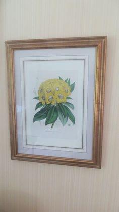 """4 antique framed hand tinted botanical prints, 33""""-17"""""""