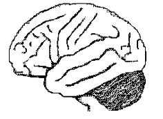 Neuroscience Resources for Kids - Coloring Book GREAT images for Cornell Notes to label High School Biology, High School Science, Teaching Science, Science Experiments, Coloring For Kids, Coloring Books, Cornell Notes, Brain Based Learning, Human Body Unit