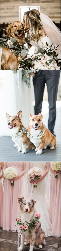 #dogs #weddingdogs #weddingphotos #weddingphotography #weddingideas #weddinginspiration bride and her puppy wedding photo ideas_2