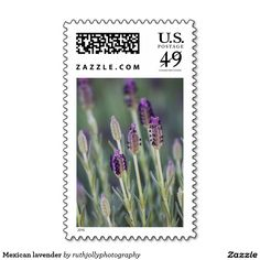 Mexican lavender postage stamp