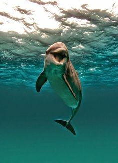 YOUR BLOG TIME: Dolphin time (hora del delfín)