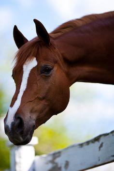 Horse Head 2 | Flickr - Photo Sharing!