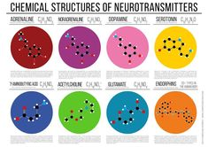 Chemical Structures of Neurotransmitters Education Poster