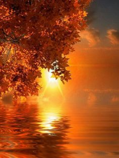 Autumn sunrise over the lake Beautiful Sunset, Beautiful World, Beautiful Places, Trees Beautiful, Belle Photo, Pretty Pictures, Mother Nature, Nature Photography, Amazing Photography