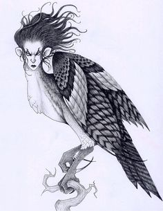 Harpie -- bird of prey with a woman's face