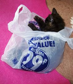 HAY DO NOT HAVE A GO AT ME, YOU LEFT THE PLASTIC BAG OUT