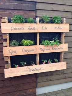 Kruidentuin in pallet Herb Garden Pallet, Herb Garden Design, Pallets Garden, Herbs Garden, Palette Herb Garden, Pallet Garden Walls, Pallet Gardening, Diy Herb Garden, Garden Ideas With Pallets