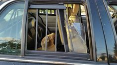 """Sea Lion Wanders to Imperial Beach High School, Gets """"Detained"""" by Deputies 