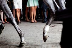 Tight tendons in the New York Times today: Horses passed in front of spectators at the race track.