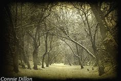 Trail Through Winter Woods 85 x 11 Photograph by ConnieDillon10, $17.00